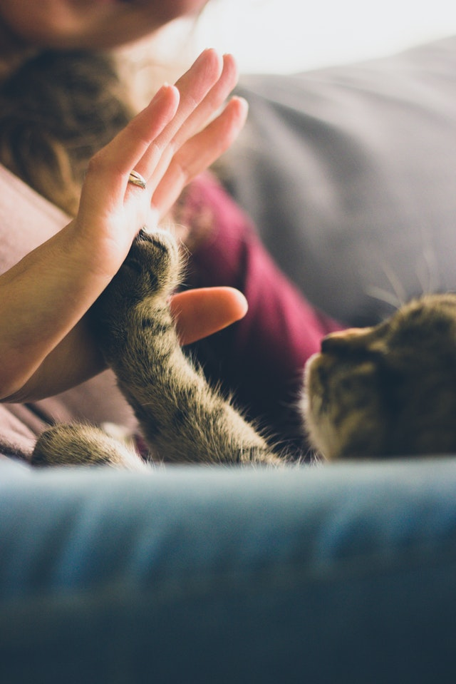 cat hi five